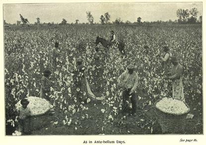 Plantaciones de algodón y mano de obra esclava
